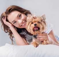 Как заниматься разведением собак